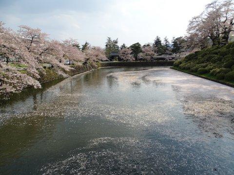 2020-4-29 上杉神社の桜:画像