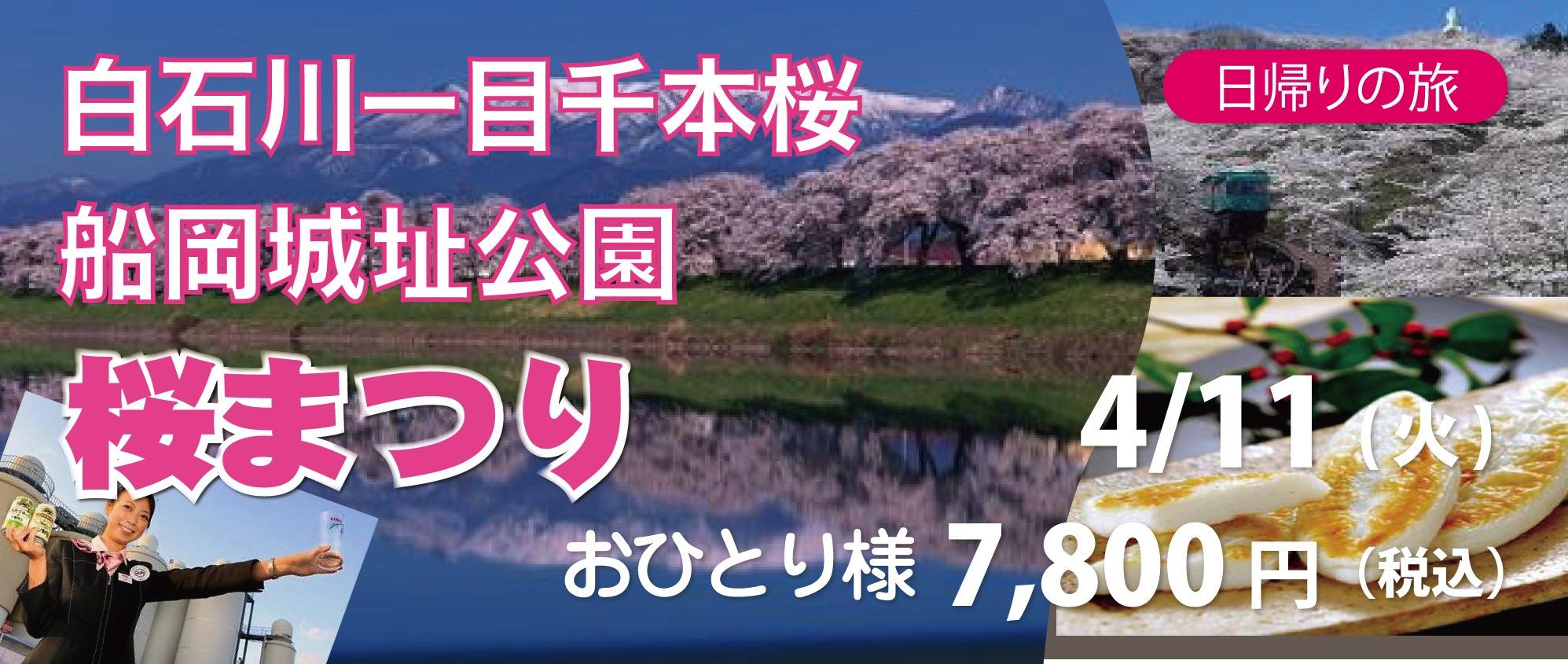 白石川一目千本桜と船岡城址公園 桜まつり 4月11日(火)出発 日帰り