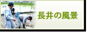 長井の風景