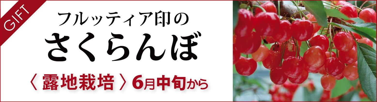 フルッティア印のさくらんぼ|露地栽培