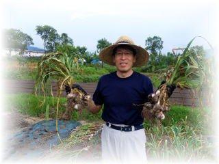 赤倉ファーム|最上赤にんにくの栽培:画像