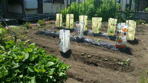 今年も家庭菜園頑張るぞ:画像