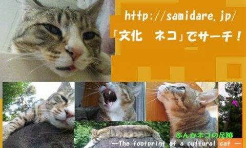 文化ネコの足跡:画像