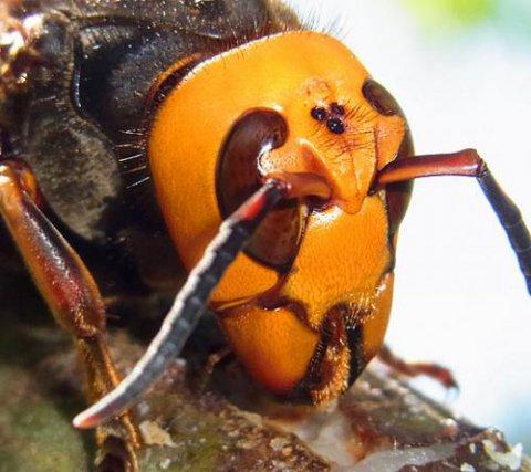 ハチ対策 蜂対策 駆除と防護にはコレ!:画像