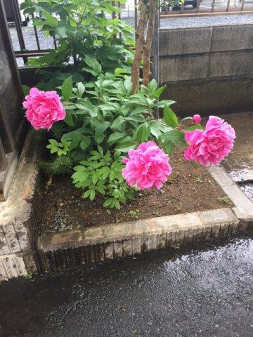 梅雨の季節ですね:画像