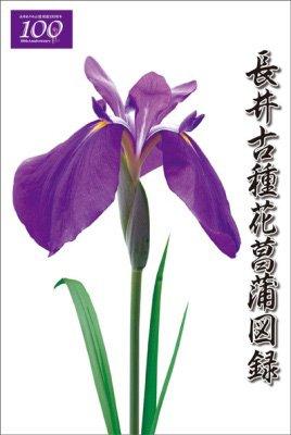 【長井古種花菖蒲図録を発売しました】:画像