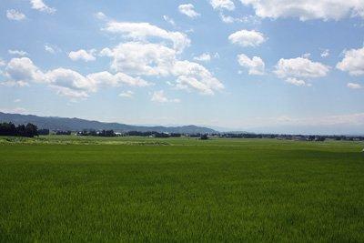 【一面の緑の絨毯!〜稲が元気に育っています】:画像