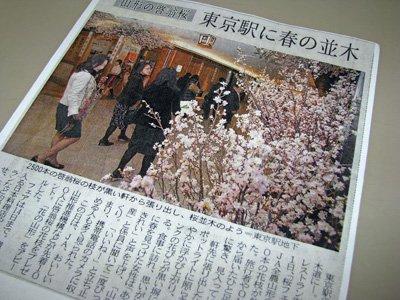 【黒塀横丁で桜フェア〜冬のサクラ 啓翁桜】:画像