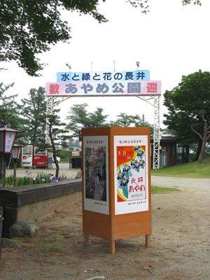 【長井あやめ祭オープニングイベント開催!】:画像