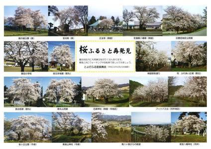 【桜ふるさと再発見〜豊田地区】:画像