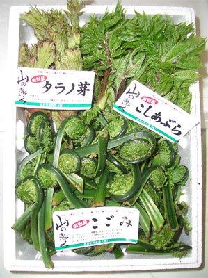 【もうすぐ山菜が出始める時期です&さくら通信+゜*】:画像