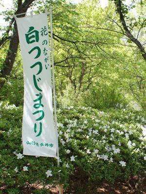 【白つつじまつり開園式】:画像