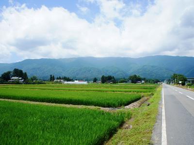 【長井の山の風景】:画像