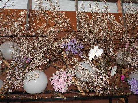 「啓翁桜フェア」が開催のお知らせ:画像