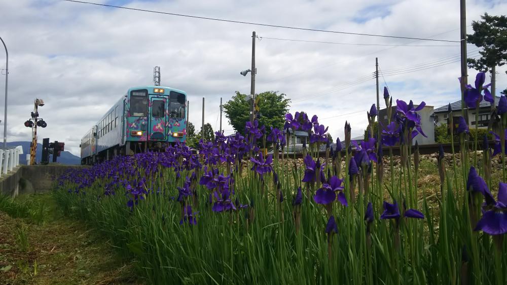 地に紫の詩が残る:画像