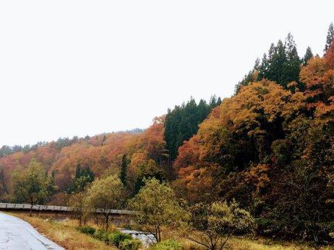 小野川温泉の紅葉:画像