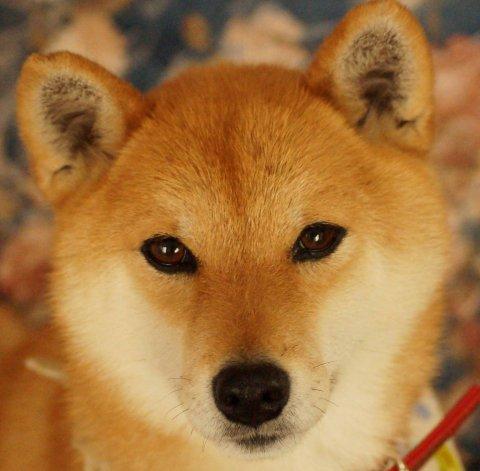 ryu1 note:图片