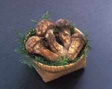 松茸狩りと食事情報:画像