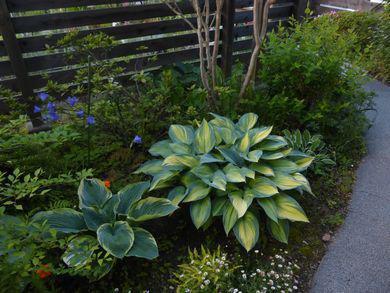 太陽の光を浴びると植物の感じが・・・:画像