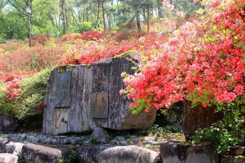 舞鶴山つづじ公園ライトアップご案内:画像