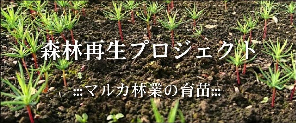 森林再生プロジェクト|マルカ林業の育苗