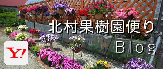 北村果樹園ブログ