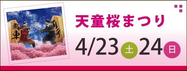 tendo_banner_sakura.jpg