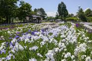 Ayame garden