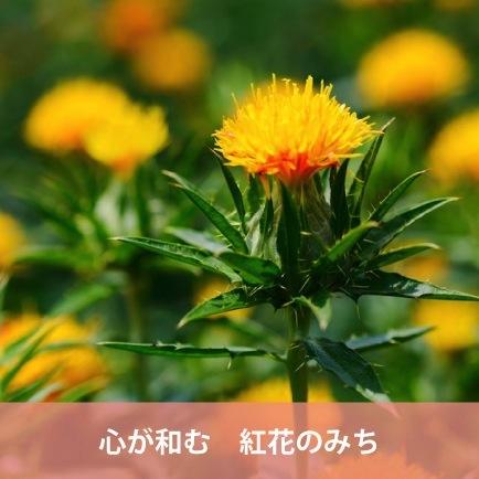 心が和む 紅花のみち(山形県)