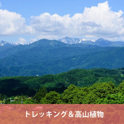 [100 famous mountains in Japan in Yamagata] Trekking & alpine plant