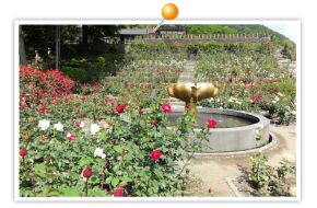 あつみ温泉ばら園