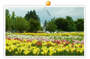 Dondondaira lily Park