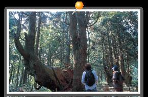 Genso-no-Mori (forest)
