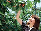 摘草莓的照片
