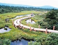 View Matsudaira (around July): Image