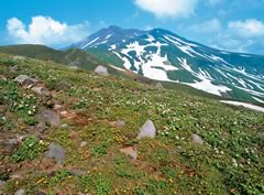 Mt. Chokai-san (the end of June): Image