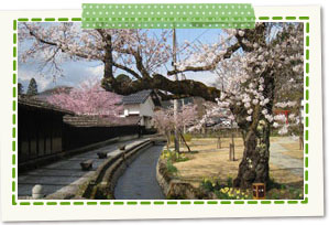 Ozeki Park