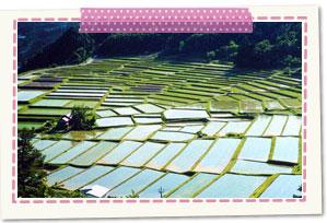 日本の棚田百選 椹平の棚田