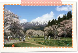 Kama-no-Koshi Cherry Blossoms