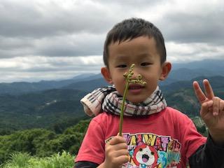 【食育】初めてのワラビ採り〜5歳児の大冒険〜:画像