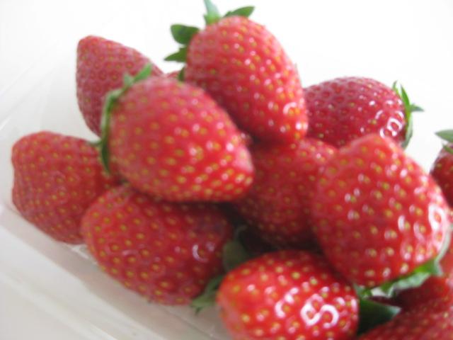 イチゴの季節がスタート!:画像