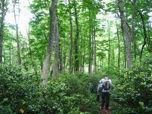 奥山を歩こう!桑住平トレッキングを開催しました:画像