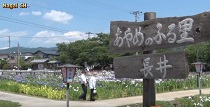 あやめのふる里 山形県長井市 :画像