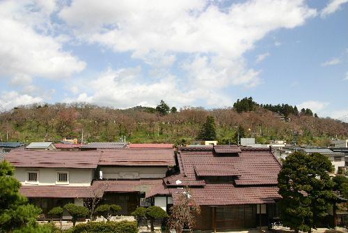 烏帽子山公園の桜情報 山全体がほんのり赤くなったかなぁ〜:画像