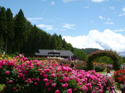 東沢バラ公園:やまがたへの旅/山形県観光情報ポータルサイト